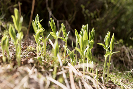 Young plants start to grow on the forest floor