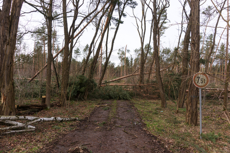 Trees block the forest road after the storm in Germany