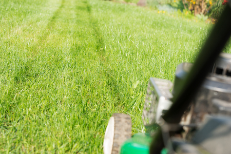 Freshly mowed lawn in the garden with lawnmower in the foreground Zdjęcie Seryjne