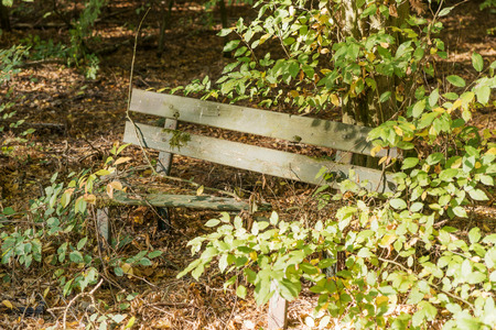 Broken wooden bench in the forest for tourists