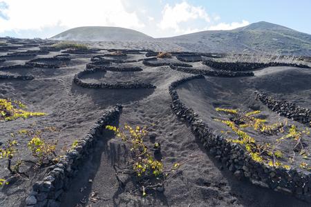 Wine Valley of La Geria in Lanzarote, Canary Islands, Spain