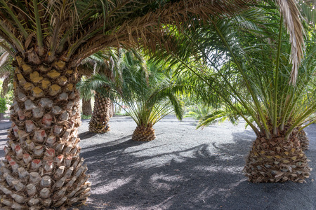 Garden with palm trees in the recreational park