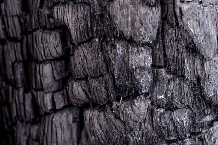 Black coal background. Wood charcoal texture. Burnt tree