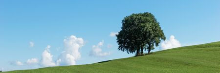 Panoramic landscape. Single tree group on green field and blue sky Archivio Fotografico - 129479474