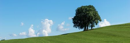 Panoramic landscape. Single tree group on green field and blue sky
