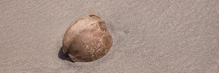 Panoramic image from the single coconut on the sandy beach