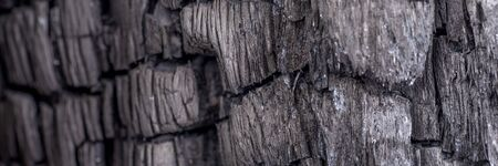 Panoramic black coal background. Wood charcoal texture. Burnt tree