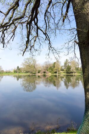 Reflection of trees in the calm lake in spring