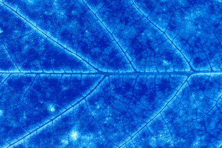 Blue color abstract macro texture leaf close up