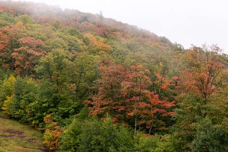 Autumn fog on the mountain hills. Misty fall woodland