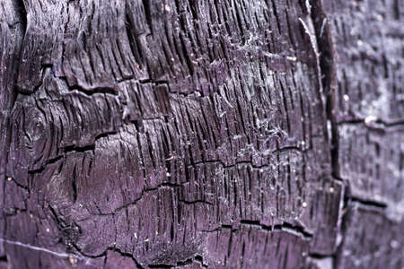Surface of charcoal. Charred tree texture. Burnt wood black background