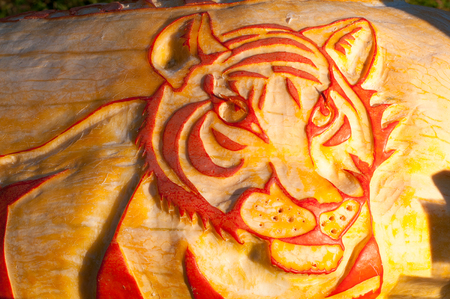 CHADDS FORD, PA - OCTOBER 26: Tiger Pumpkin at The Great Pumpkin Carve carving contest on October 26, 2013 Editorial
