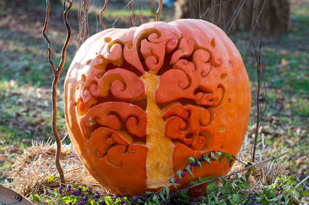 CHADDS FORD, PA - OCTOBER 26: Tree Pumpkin at The Great Pumpkin Carve carving contest on October 26, 2013