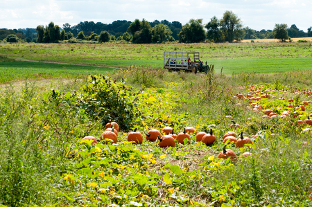 Various Pumpkins in green field during fall