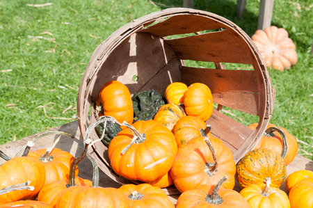 Various Pumpkins and other gourds in basket on table during fall