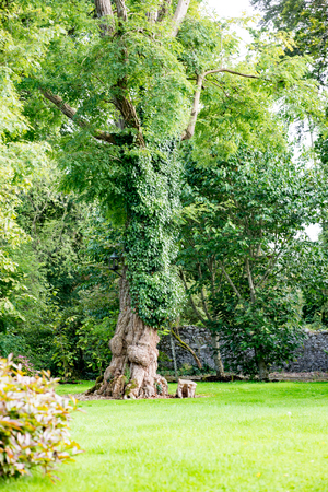 COUNTY OFFALY, IRELAND - AUGUST 23, 2017: Birr Castle Gardens in County Offaly, Ireland