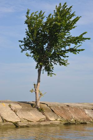 Tree in breakwall