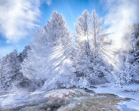 Snow Covered Trees in Mammoth Hot Springs with Sunbeams in Steam Stok Fotoğraf