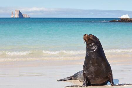 Galapagos Sea Lion on Beach