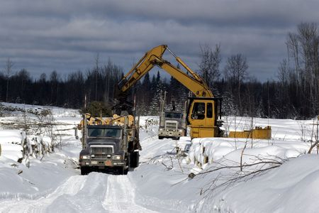 Loading spruce trees onto a logging truck in boreal forest cutblock during winter photo