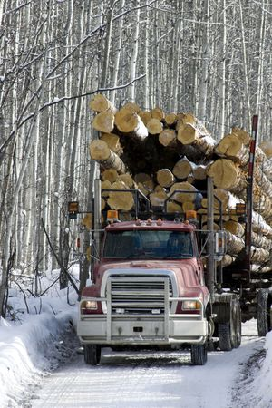 Loaded logging truck with spruce trees travelling on narrow ice road in boreal forest