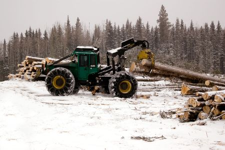 logging: Skidder hauling spruce tree during winter forestry operations