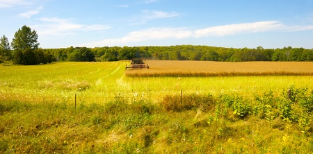 agriculture machinery: Wide angle image of a combine cutting down a field of rapeseed in the early autumn.  Stock Photo