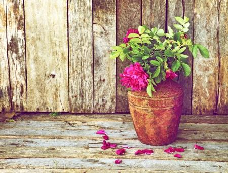vintage grunge image: Riccamente colorata immagine stile vintage di belle rose selvatiche in un vaso rustico su un fondale di legno grunge con copia spazio.