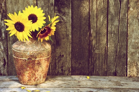 High contrast, vintage image of a rustic vase with beautiful sunflowers in the partial shade on a rustic, grunge background with copy space.  photo