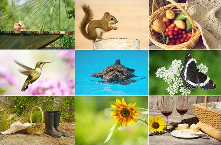 themed: Colorful summer themed collage.  Stock Photo