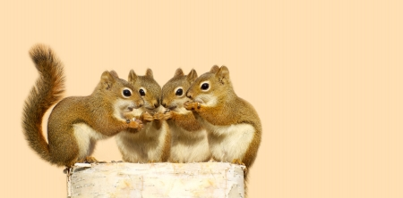 Close up image of four cute baby squirrels on a birch log sharing some sunflower seeds, with copy space
