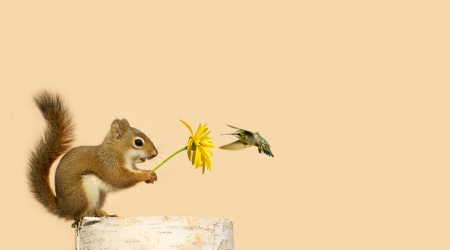 feed up: Greeting card design with a baby squirrel holding up a yellow flower for his little hummingbird friend to feed on, with copy space  Stock Photo