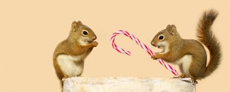 복사 공간, 겨울에 로그에 자리 잡고있는 동안 행복을 찾고 예쁜 여성에 크리스마스 시간에 사탕 지팡이를 제공하는 젊은 남성 다람쥐의 귀여운 이미