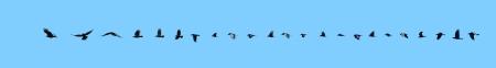 블루에 고립 된 까마귀의 재미있는 23 이미지 비행 시퀀스,
