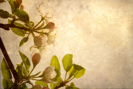 Beautiful abstract antique image of apple blossoms with beige toned texture reaching towards the sun with copy space