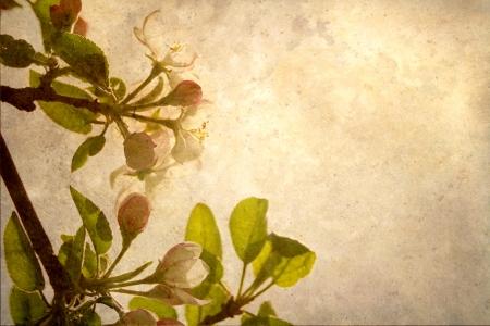 Hermosa imagen abstracta antigua de flores de la manzana con textura tonos beige, alcanzando hacia el sol con copia espacio photo