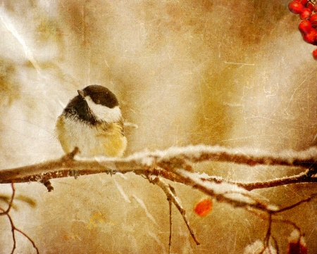 Vintage Christmas card with an adorable chickadee in the snow with copy space   Stock Photo