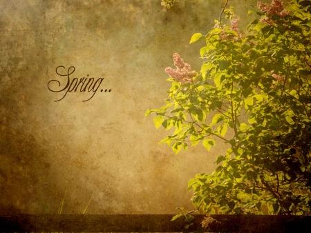 Vue textur�e d'un buisson de lilas au printemps, au petit matin avec un texte, printemps Banque d'images