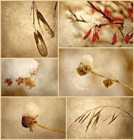 desolación: Collage abstracto que ofrece imágenes antiguas de textura macro de plantas muertas en la belleza de la nieve en la desolación del invierno