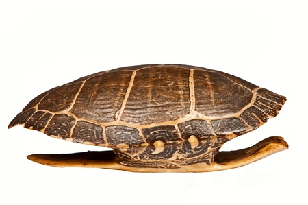 Antique turtle shell, isolated