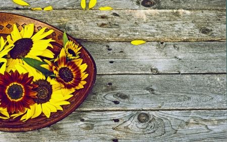 Colorful high contrast and highly defined vintage style image of image of a wooden bowl with brightly colored sunflowers on a rustic background   Stock Photo