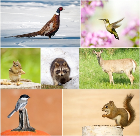 Colorful and unique collage featuring a variety of wildlife throughout the different seasons   photo