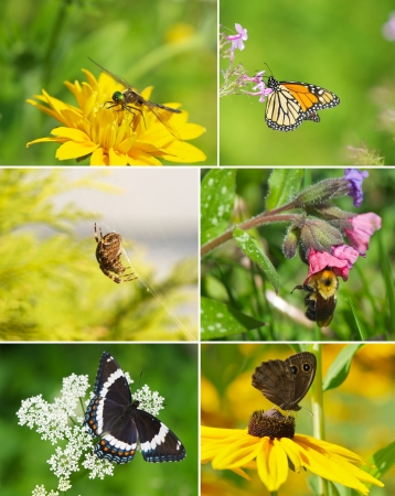 Colorful summer themed collage featuring different insects in the garden   Stock Photo - 15140043