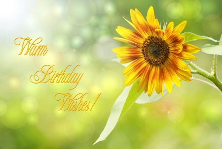 Birthday card design featuring a beautiful sunflower in the sunshine with bokeh and text, Warm Birthday Wishes
