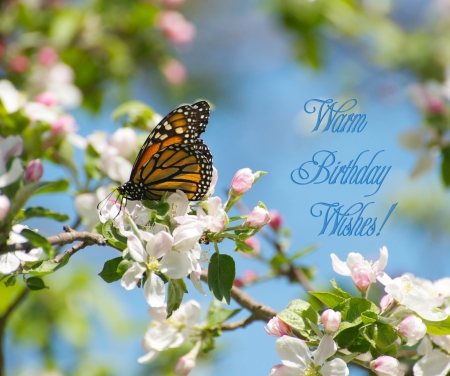 Conception color�e de carte d'anniversaire comportant un beau papillon monarque se nourrissant de nectar de fleurs de pommier au printemps Banque d'images