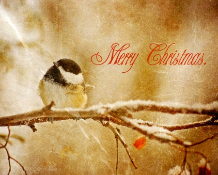 Vintage Christmas card with an adorable chickadee in the snow   photo