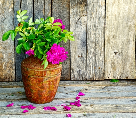 Richly colored vintage style image of beautiful wild roses in a rustic vase on a grunge wood backdrop with copy space   photo