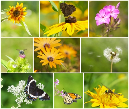 Colorful summer themed nature collage with beautiful flowers, butterflies, a bee, and a dragonfly