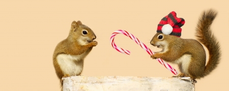 Cute image of two squirrels. Stock Photo - 15556655