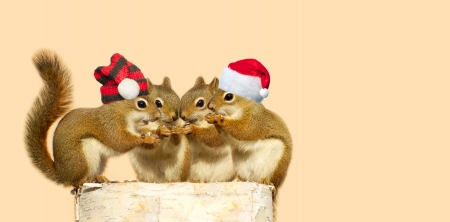 Cute image of four adorable baby squirrels on a birch log sharing some sunflower seeds, the two boys wearing Christmas hats, with copy space.
